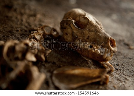 Old Abandoned Dog Skeleton on the ground. Spider webs a dust all around. Lots of details. - stock photo