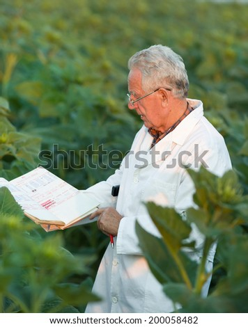 Old agronomist in white coat looking in notebook in sunflower field - stock photo