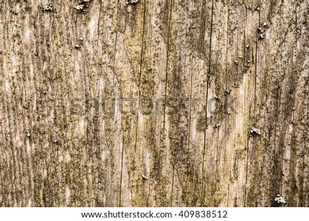 Old and rotten wooden wall. View close up