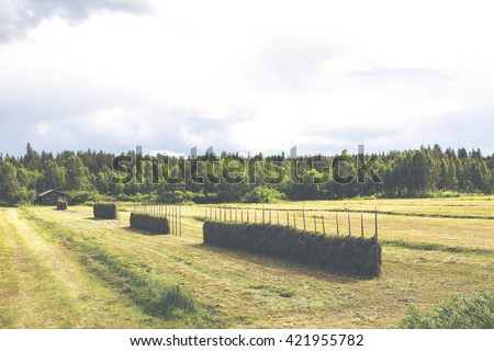 Old and traditional hay poles filled with fresh hay and an old barn on the background. Focus point is on the front poles. Image taken on a cloudy summer day. Image has a vintage effect applied. - stock photo