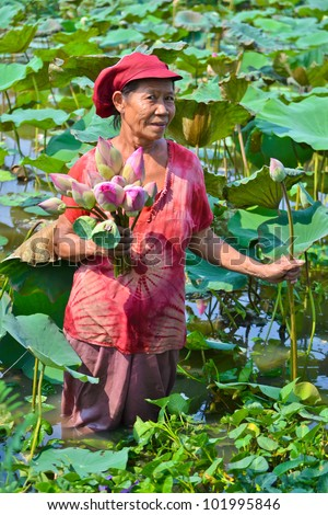 old asian women take lotus in country pond of thailand southeast asia