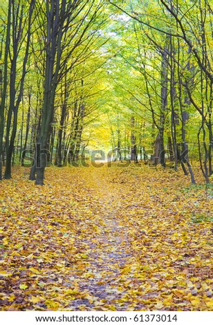 Old autumn forest in the morning pore of day - stock photo