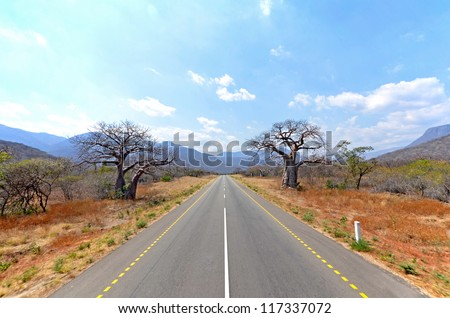 Old Baobab Trees along straight road with Mountains in the Background - stock photo