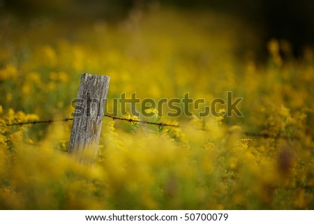 Old Barbed wire fence with creamy background