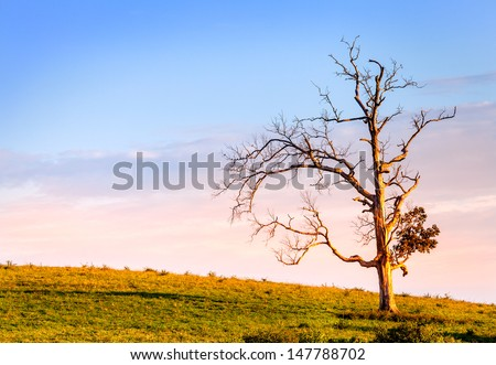 Old bare tree on a hill at sunset