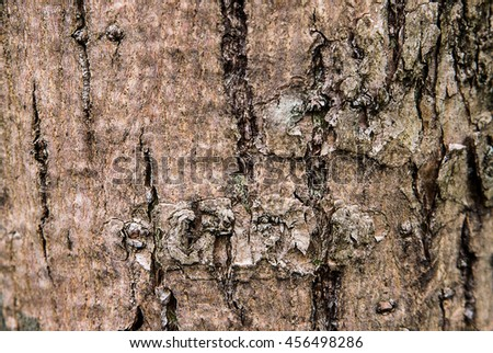Old bark background texture