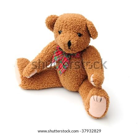 Old bear - stock photo