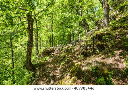 Old beech forest with hiking trail in the mountains