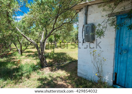 Old brick built hut in an olive grove. - stock photo