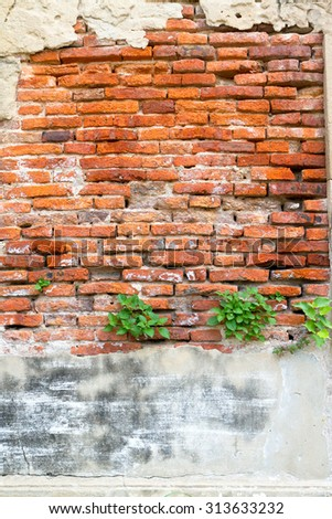 old brick wall with plant  - stock photo