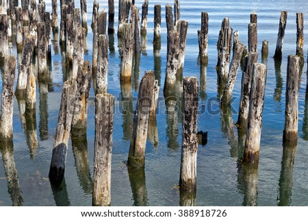 Old burned pier pilings in the harbor of Portland, Maine