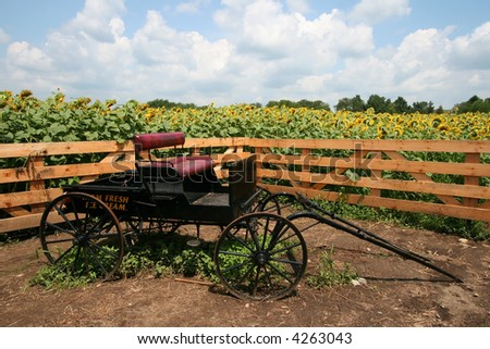 old carriage sitting in front of sunflower field