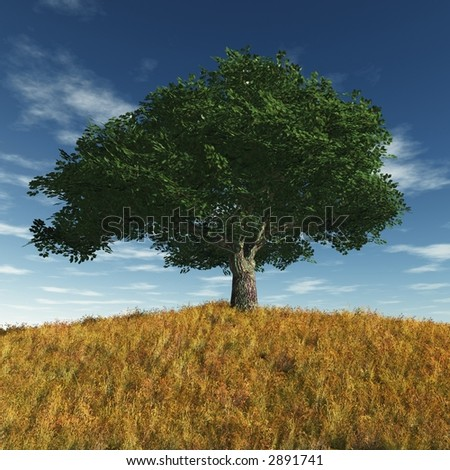 old cherry tree in a summer day - stock photo