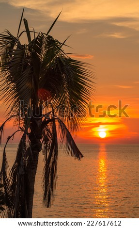 Old coconut tree and golden sea-sky before sunset - stock photo