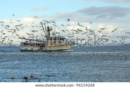Old commercial fishing trawler heading out to sea in the Kachemak Bay near Homer, Alaska in winter surrounded by seagulls and shorebirds with snowy mountains in the background. - stock photo