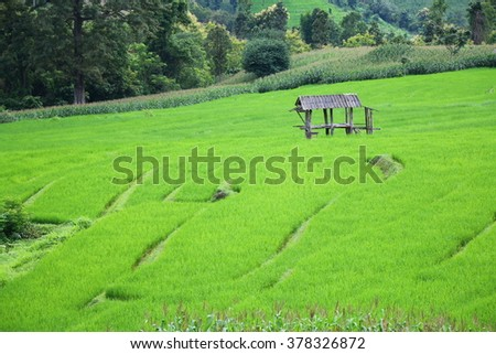 Old cottage and green rice field in Chiang Mai, Thailand