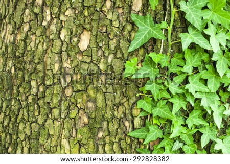 Old cracked mossy tree bark texture with green plant - stock photo
