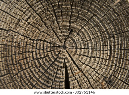 Old crackled wooden texture Wood cross section background - stock photo