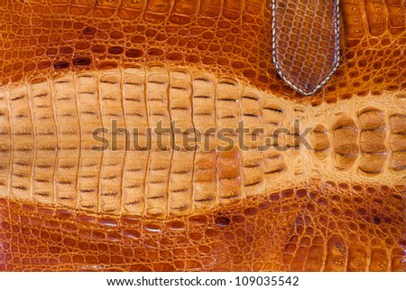 Old crocodile leather texture - stock photo