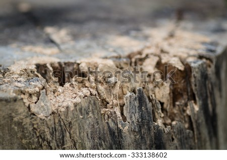 Old damaged wood as a symbol of aging decay or termite insect damage as a tree rotting withholes and tunnels weathered by natural elements in a close up. - stock photo