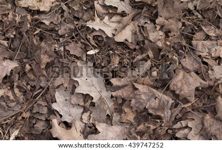 Old dead leaves fallen on the ground. Brown foliage texture. Autumn background - stock photo