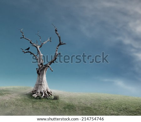 Old dead tree  - stock photo