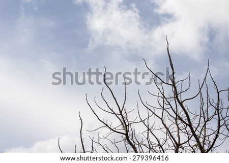 old dead tree against dark cloudy sky - stock photo