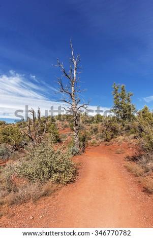 Old desert tree, blue Skies & white clouds in Red Rock Country near Sedona, Arizona. Panoramic vistas. Biking, hiking, & walking trails. Beautiful sunrises & sunsets. Unsurpassed landscape colors. - stock photo