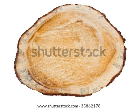 Old dirty pine tree texture. Cross section. Isolated on white - stock photo