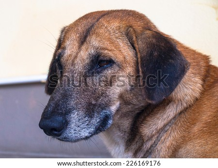 Old dog alone feel lonely, time pass alway. - stock photo