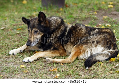 Old dog lying on the grass - stock photo