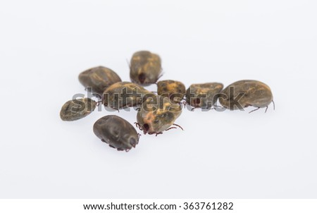 old dog tick Preparation breeds