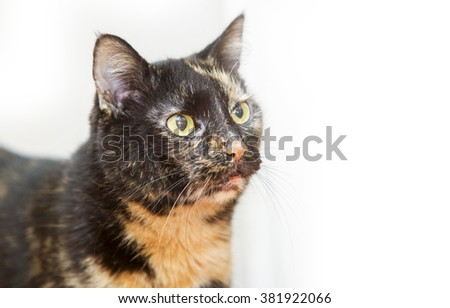 Old domestic cat on white