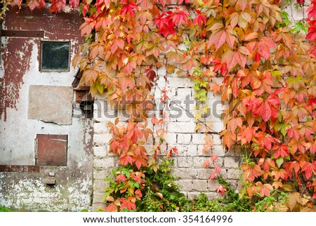 Old doors, white brick wall and autumn leaves - stock photo