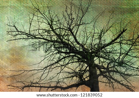 Old dry dead tree Vintage photos retro style - stock photo