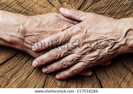 old elderly hands and old tree - concept