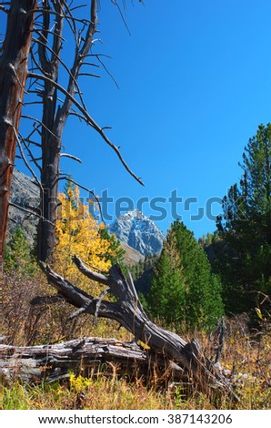 Old felled trees in Altay mountains at autumn time.