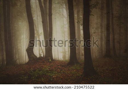 old forest in fog with grunge texture vintage photo - stock photo