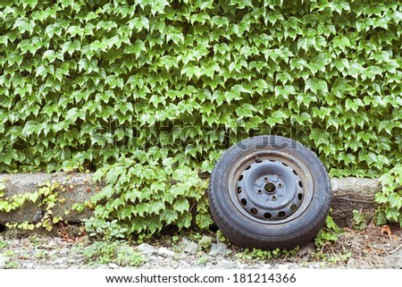 old garbage car wheel close to the wall covered by green ivy - stock photo