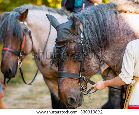 Old gray horse.  The old gray horse is in the park. - stock photo