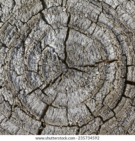 Old gray tree stump in Germany, Europe - stock photo