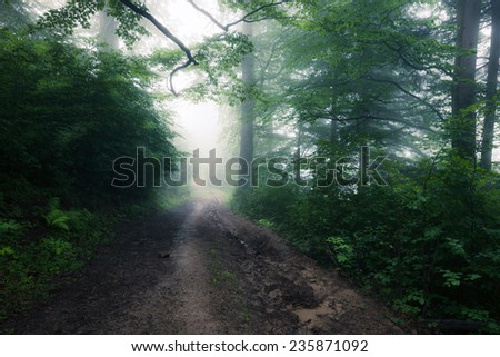 Old green forest - stock photo