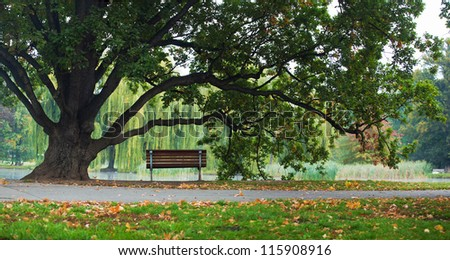 old green oak tree and bench in park - stock photo