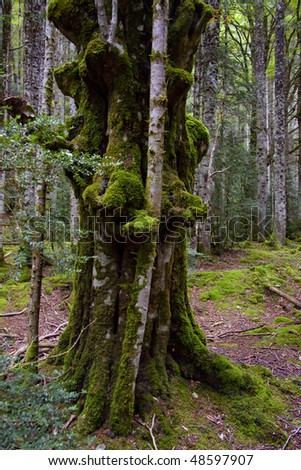 Old green tree with moss. France, dark forest. - stock photo