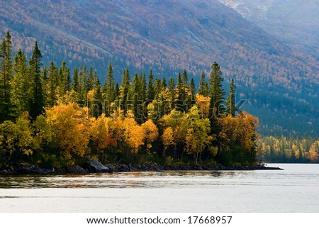 Old growth forest at the lake - stock photo