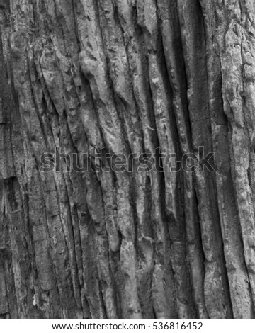 Old growth tree trunk close up detail in black and white in an ancient forest