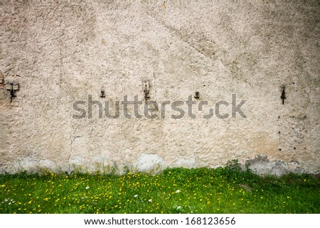 Old grunge street wall with blooming dandelions - stock photo