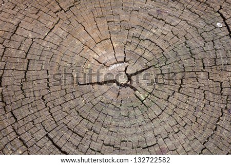 Old grunge stump background - stock photo