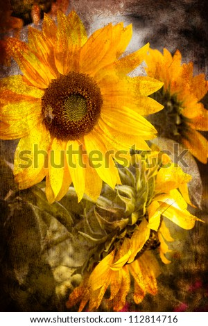 Old grunge vintage postcard with beautiful sunflower/Flower Card/ - stock photo