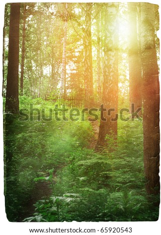 old grungy illustration, sunset in the forest - stock photo
